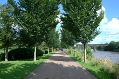 Tree lined path at Miller Park, Preston (Tony Worrall) Tags: preston lancs lancashire city welovethenorth nw northwest north update place location uk england visit area attraction open stream tour country item greatbritain britain english british gb capture buy stock sell sale outside outdoors caught photo shoot shot picture captured ilobsterit instragram photosofpreston park millerpark sunlit natural seasonal trees walk path treelined shadows