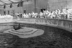 California sea lion pool. (PeteMartin) Tags: bw crowd enclosure infrared sealion zoo amsterdam netherlands