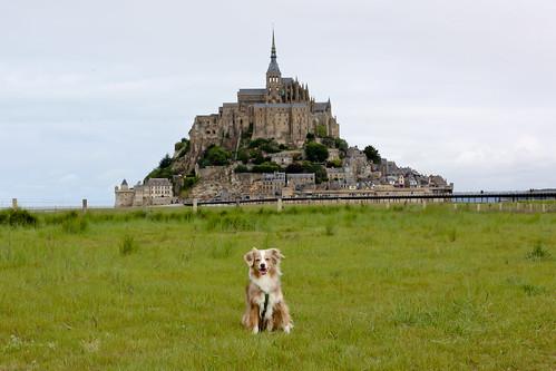 Laika at Mont Saint-Michel, France
