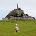 Laika at Mont Saint-Michel, France