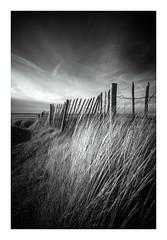 'Fenceline II' - West Wittering / August 21st (Edd Allen) Tags: landscape clouds infrared blackandwhite bw monochrome eastsussex uk southeast england greatbritain nikond610 nikon d610 zeissdistagon18mm serene bucolic beach westwittering fence sanddunes