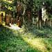 Jüdischer Friedhof in #Schmieheim bei #Lahr (#Baden)