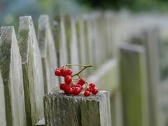 HFF (beatawozniak1968) Tags: fencefriday fence wooden hff fencedfriday
