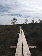 Lahemaa National Park (unciclamino) Tags: estonia lahemaa nationalpark park nature majakivi trail pikanomme forest