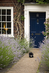 Norwich Cat at 33 (ir0ny) Tags: norfolk norwich cat door