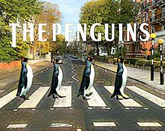 The Penguins (Swissrock-II) Tags: photomanipulation photoshop adobe photoshopart photoart lightroom manipulation penguins abbeyroad challenge digitalmania august 2019