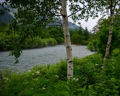Kamikochi Azusa River (shinichiro*) Tags: 松本市 長野県 日本 20190706dsc8142 2019 crazyshin nikonz6 z6 nikkorz2470mmf4s july summer 大正池 kamikochi nagano japan jp autoisospeedupper3200 candidate 48606585246