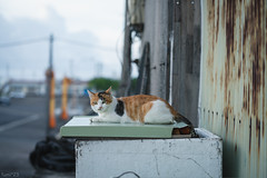 猫 (fumi*23) Tags: ilce7rm3 sony sel85f18 85mm fe85mmf18 a7r3 animal harbor port cat chat gato neko emount katze ねこ 猫 ソニー 港