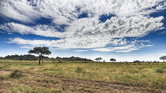 Not Only The Clouds ... (AnyMotion) Tags: morukopjes savannah savanna savanne landscape landschaft clouds wolken sky himmel 2018 anymotion serengetinationalpark tanzania tansania africa afrika travel reisen nature natur 6d canoneos6d landschaftsaufnahmen