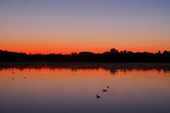 Lueurs de l'aube (michel David photography) Tags: morning sunrise aube étang pond