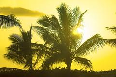 Hawaiian Sunset - Paradise Cove - Kapolei, Oahu, Hawaii (J.L. Ramsaur Photography) Tags: sunset sun sunrays sunlight sunglow orange yellow hawaiiansunset sunsetinhawaii paradisecove kapoleioahuhawaii kapoleihawaii landscape southernlandscape nature outdoors god'sartwork nature'spaintbrush god'screation jlrphotography nikond7200 nikon d7200 photography photo oahuhi 25thanniversary honolulucounty hawaii 2019 engineerswithcameras islandsofhawaii photographyforgod hawaiianislands islandphotography screamofthephotographer ibeauty jlramsaurphotography photograph pic oahu tennesseephotographer oahuhawaii 25years anniversarytrip bucketlisttrip thegatheringplace 3rdlargesthawaiianisland 20thlargestislandintheunitedstates therainbowstate palmtree palmtrees treesilhouette silhouette lensflare sunflare flare