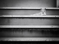 6511 - Luke Stairwalker (Diego Rosato) Tags: luke stairs scale gatto cat kitten gattino randagio stray bianconero blackwhite fuji x30 rawtherapee