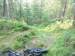Romsåsen (mtbboy1993) Tags: romsåsen askim kykkelsrud norge norway forest skog singletrack trail sti tursti foresttrail indreøstfold østfold sonycameraapp rawtherapee
