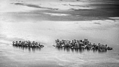 Brissago Islands - Switzerland (Patrik S.) Tags: sony a7iii a7m3 bw black white islands lago lage maggiore switzerland subtropical boat park nature tourist attraction palm trees sunny trae travel landscape water tilt shift ripples waves small blackandwhite ngc