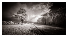 Ham Street / April 26th (Edd Allen) Tags: uk southeast eastsussex england greatbritain nikon landscape seascape clouds atmosphere atmospheric sunset d610 infrared nikond610 bw blackandwhite sun spring cuckmerehaven cuckmere windswept trees treescape country countryside hamstreet field