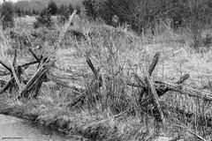 Tumble Down (gabi-h) Tags: fence cedarrailfence blackandwhite gabih princeedwardcounty neighbourhood rural rustic ontario farm water stream grass old fashioned vintage