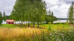 Sauna by the Lake (Mikael Neiberg) Tags: landscape finland finnishtradition finnishlife suomi sauna lake birch finnishnature flowers field flowerfield nikond7100 sigma1835mmdchsmart