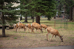 IMG_9594 (RegiShu) Tags: 2019 camping oregon summer us usa wallowalakestatepark joseph unitedstatesofamerica