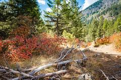 IMG_9553 (RegiShu) Tags: 2019 camping oregon summer us usa wallowalakestatepark joseph unitedstatesofamerica