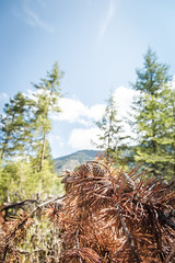 IMG_9531 (RegiShu) Tags: 2019 camping oregon summer us usa wallowalakestatepark joseph unitedstatesofamerica