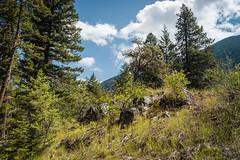 IMG_9533 (RegiShu) Tags: 2019 camping oregon summer us usa wallowalakestatepark joseph unitedstatesofamerica