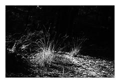 In the woods (Theo Bauhuis) Tags: gras bos lochem ampsen blackandwhite nature monochrome backlight forest woods zwartwit backlit tegenlicht