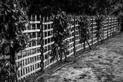 HFF -  Decorative Fence (Jose Rahona) Tags: fencedfriday fencefriday fence friday leaves hojas decorativo ornamental balncoynegro blackandwhite monochrome