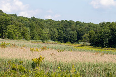 7K8A4973 (rpealit) Tags: scenery wildlife nature weldon brook management area