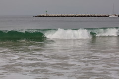 Strong Breakers, Surf, Ballona Jetty, CA CQ4A0384 (Hart Walter) Tags: ballonajetty surfbird willet marbledgodwit leastsandpiper heermannsgull caspiantern royaltern blackturnstone westerngull