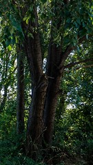 Nature (Hickoryyy) Tags: trees tree forest mothernature naturelover mountain sunrise treestagram treescape natureshooters weather outdoors dusk twilight hiking light landscapestyles landscapelover skylovers day naturediversity landscapes naturephoto naturewalk naturelove wildlife natureprefection naturegram water instanature