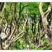 Bregagh Road NIR - Dark Hedges 07