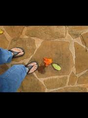 Road Kill (Brave Heart) Tags: flowers flower feet foot hawaii oahu lookdown sandal crocs