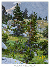 Trees, Rocky Meadow (G Dan Mitchell) Tags: trees meadow grass wildflowers flowers boulders rocky subalpine forest johnmuir wilderness area sierra nevada mountains ridge landscape nature california usa north america