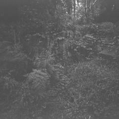 Tree stump (Matthew Paul Argall) Tags: pouvastart fixedfocus 120film 120 mediumformat fomapan100classic 100isofilm blackandwhite blackandwhitefilm squareformat squarephoto