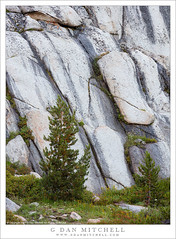 Tree and Rock Face (G Dan Mitchell) Tags: johnmuir wilderness area sierra nevada mountain range pioneer basin rock wall face tree grass nature landsape fractured california usa north america