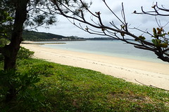 errances okinawiennes (8pl) Tags: mer plage sable okinawa japon sablefin arbre branche nature eau costal côtier herbe gazon