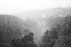 Misty Canyon (markjwyatt) Tags: konicabigminihg guatemala city film analog ilford fp4 monochrome mist canton trees beautiful houses hill morning