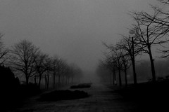 Lost in the fog (shou yokoya) Tags: film 135 35㎜ bw bessat voigtlănder colorskopar 21㎜ kodak trix 400tx 400 monochrome fog foggy park trees analogue