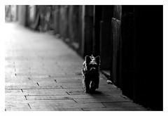 """Figures Libres à Barcelone 70"" (TBWLC Photography) Tags: fdrouet nb bw monochrome monochrom rue street chien dog barcelona nikon d610 tbwlc"