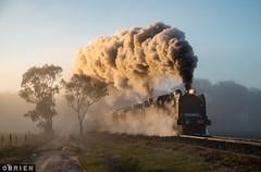Foggy Muckleford (Dobpics O'Brien) Tags: locomotive engine muckleford creek fog train rail railway railways steam steamrail srv vgr victorian victoria vr goldfields k153 k190 maldon castlemaine