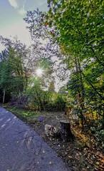 BC is best. (thnewblack) Tags: huaweip30pro leicaoptics wideangle ultrawidelens outdoors nature lensdistortions smartphone cameraphone britishcolumbia abbotsford