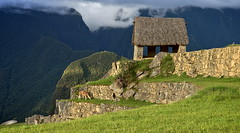 To the fantasy of the llamas (Chemose) Tags: sony ilce7m2 alpha7ii mai may pérou peru machupicchu landscape paysage montagne mountain llama hutte hut cabane hdr