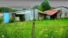 Moche rural en mineur (Jean-Luc Léopoldi) Tags: campagne rustique clôture fence barbedwire rouille verdure cielchargé tôle grillage parpaings