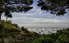 mer5 (Antony Ward UK) Tags: poole harbour sandbanks dorset eary sunrise boats sea ocean yachts trees flowers framed contrails blue red green palm rocks rockery masts calm sky water
