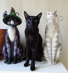 Happy Birthday, Kakashi! (annette.allor) Tags: cat black chausie jimshore figurines statues pose birthday