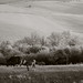 Hold the fort (2) (baro-nite) Tags: england pastoral horse landscape infrared k5 smcpentax13535mm iridientdeveloper