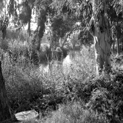* (Ilya.Bur) Tags: rolleiflex 35f planar 75mm f35 trix 400 caffenolcl 6x6 120 medium format caffenol film bw river trees park