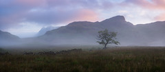 subtle colours at sunrise panorama (akh1981) Tags: panorama amateurphotography beautiful benro bleatarn cumbria clouds countryside calm fells fog hiking nikon nature nisifilters nationalpark nisi nationalheritage nationaltrust nationalheritagesite mountains morning mist outdoors rocks travel tranquil tree walking wideangle uk unesco sunrise sky landscape lakedistrict langdale valley