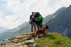 20190806-089-Haute Route day 12 - Photo sesh (Roger T Wong) Tags: 2019 alps hauteroute rogertwong sel24105g sony24105 sonya7iii sonyalpha7iii sonyfe24105mmf4goss sonyilce7m3 switzerland valais boxer bushwalk dog hike hiker mountains outdoors portrait tramp travel trek walk