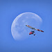 Fly Me to the Moon -- An ultralight aircraft flying in front of the moon at Wiley Slough, Washington State